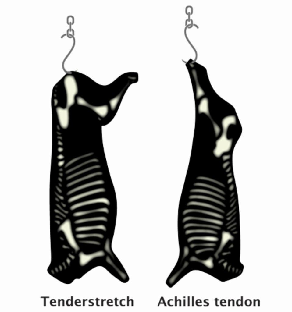 hip hung tenderstretch